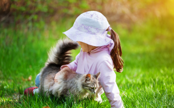 Kedinizi mutlu etmek için...