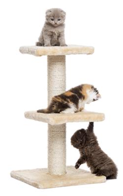 Kızgınlıkta olan bazı kediler, geceleri agresif tavırlar sergileyebilir, yaramazlık yapabilir.