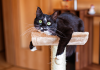 Yaz sıcaklarında kedinizi nasıl serinletebilirsiniz?
