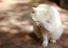 Kör bir kediyle yaşam zor değildir!