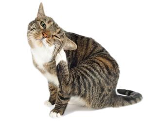 Kedi ve köpeklerde en sık karşılaşılan hastalıklar!