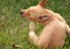 Köpeğimi pirelerden nasıl koruyabilirim?