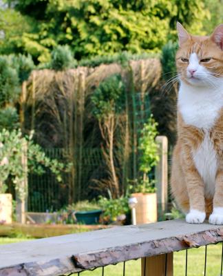 Yaz sıcaklarında sokak kedileri için dikkat edilmesi gerekenler!