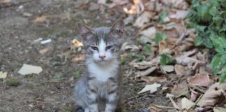 Yüreği ve göbeği kocaman kedi Çıt Çıt