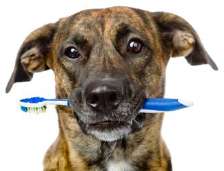 Köpeğinizin ağzının mis gibi kokması için...