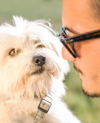 Köpeğinizin söyleyemediği 8 gerçek!