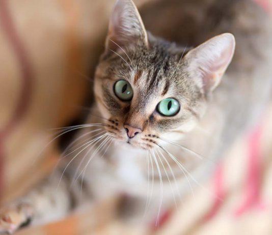 Kedimi eğitebilir miyim?