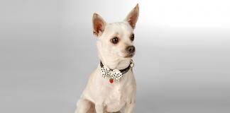 Bebek kadar hassas petler için; Lulu's Pet Couture