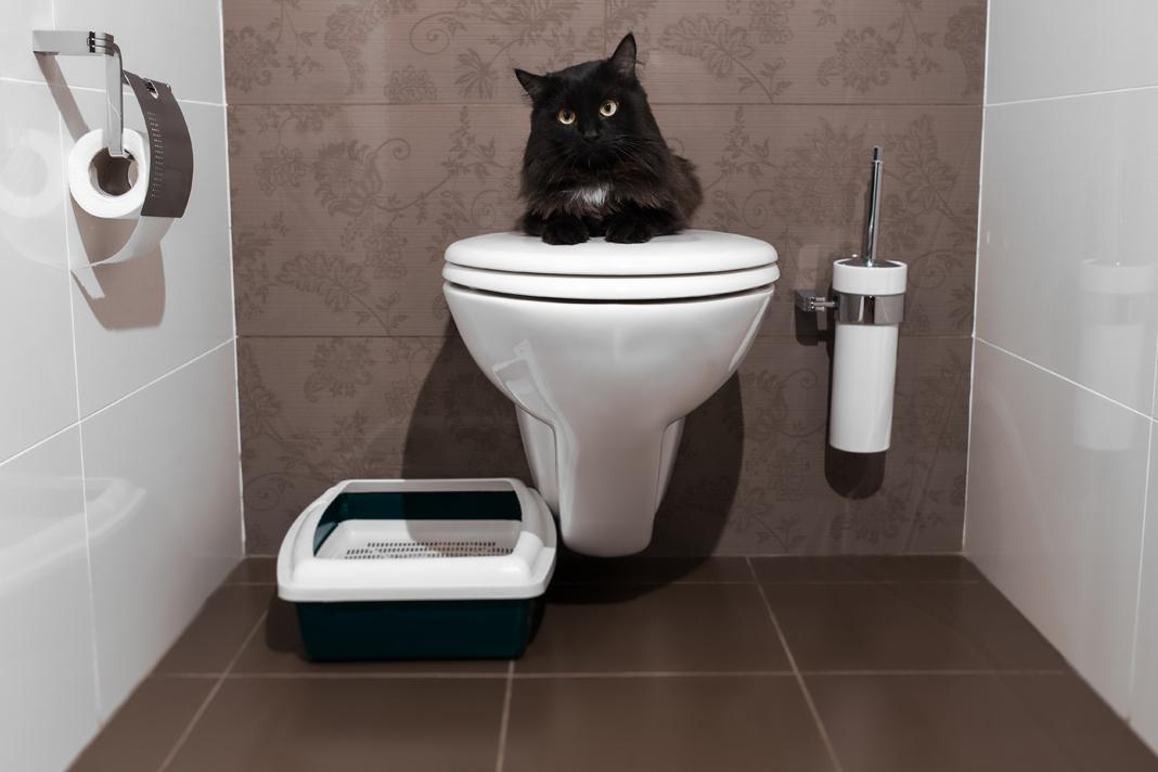 Kumundan vazgeçen kedi mi olur?