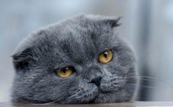 Yaşlı kedimi nasıl beslemeliyim?
