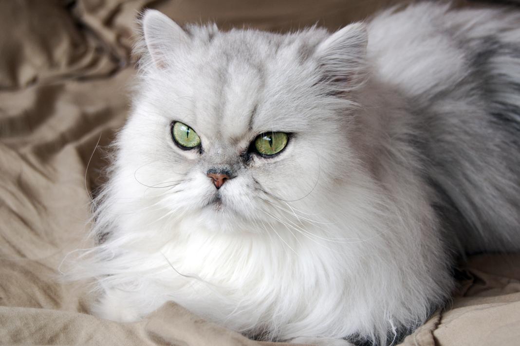Kedinizin dişlerini 5 adımda kurtarın!