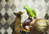 Çocuklar ve köpekler için sonbahar aktiviteleri