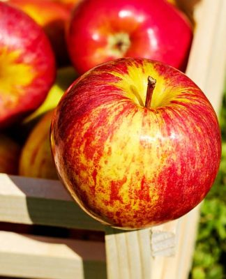 Köpekler elma sever mi?