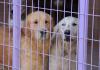 Meral Olcay'ın öncülüğünde ve birçok gönüllü hayvansever eşliğinde yürütülen Yedikule Hayvan Barınağı'na Royal Canin desteği!