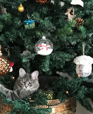 Kedimi çam ağacından nasıl uzak tutabilirim?