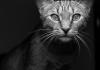 Kedim beni ısırıyor diyorsanız...