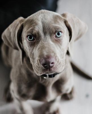 Köpeklerde kanser ve daha fazlası...