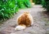 Kedilerin kuyruğu hakkında bilinmeyen gerçek!