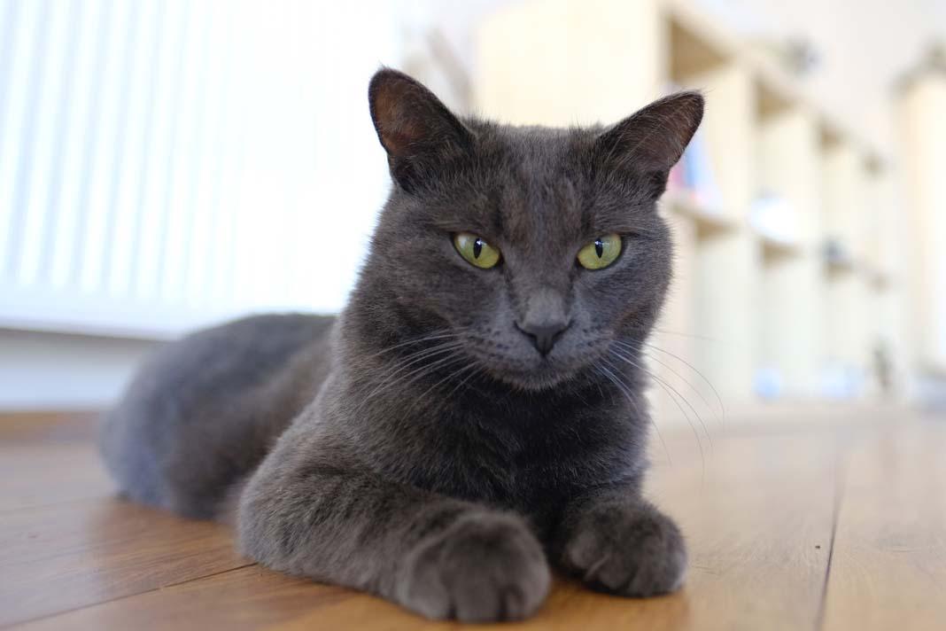 """Anıl Çelik: Toz bambaşka bir kedi. Köpek gibi gezmeyi çok seviyor. Onu üç kelimeyle özetlemek çok zor ama """"Huysuz, uyumlu ve fotojenik"""" diyebilirim."""