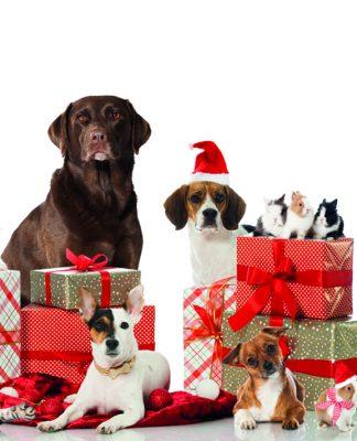 Coco Pet New Year Shopping Fest'i kaçırmayın!