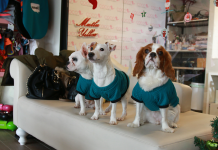 Coco Pet Spa Yılbaşı Partisi ile yeni yıla merhaba!