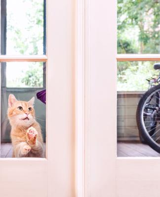 Dişi kedilerde kızgınlık