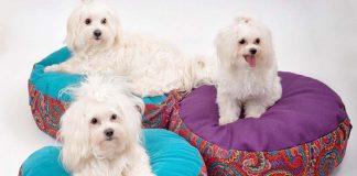 GK design by Gonca Kaya tasarımlarıyla hayvanlar mutlu, sahipleri mutlu!