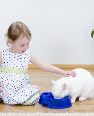 Kedi mamalarında karbonhidrat ve önemi...