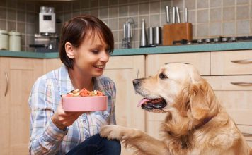 Yaşlı köpeğimi nasıl beslemeliyim?