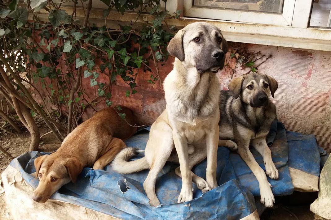 Hayvanseverlerin desteğiyle ayakta kalan yer; Melek Barınağı