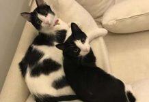 Kedilerime farklı bir aşk besliyorum- Nazlı Irmak Ekim