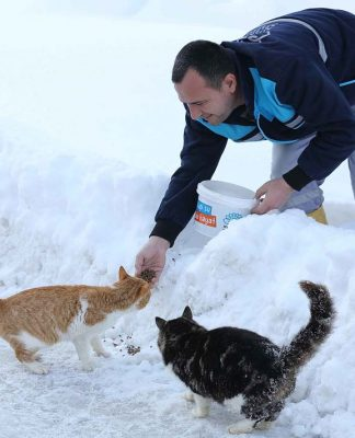 Nilüfer Belediyesi vegönüllü hayvansever dayanışması