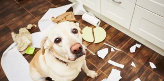 Tuvalet kağıdını parçalayan köpeklere yaklaşım