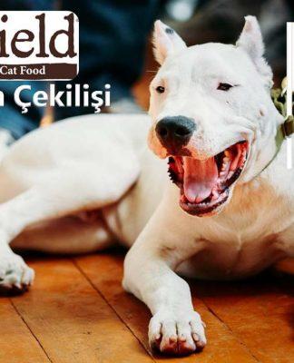 Dogo Arjantin-Wildfield Türkiyem çekilişine hazır mısınız?