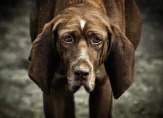 Bir köpek sahiplenmek üzerine...