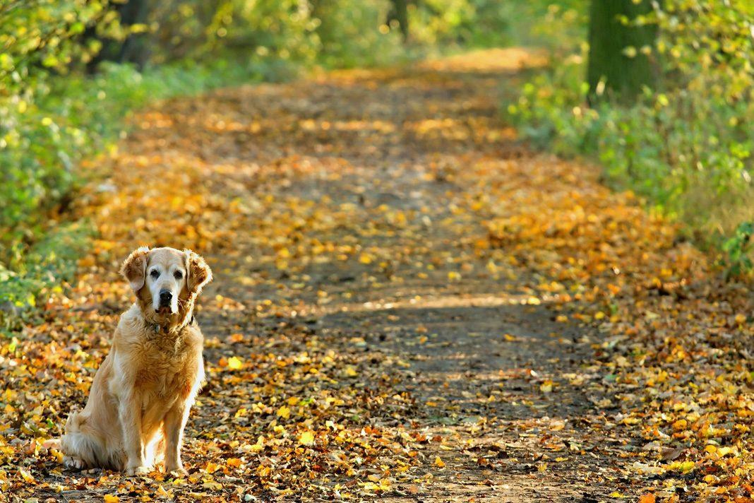 Eğer köpeğinizde artrit varsa...