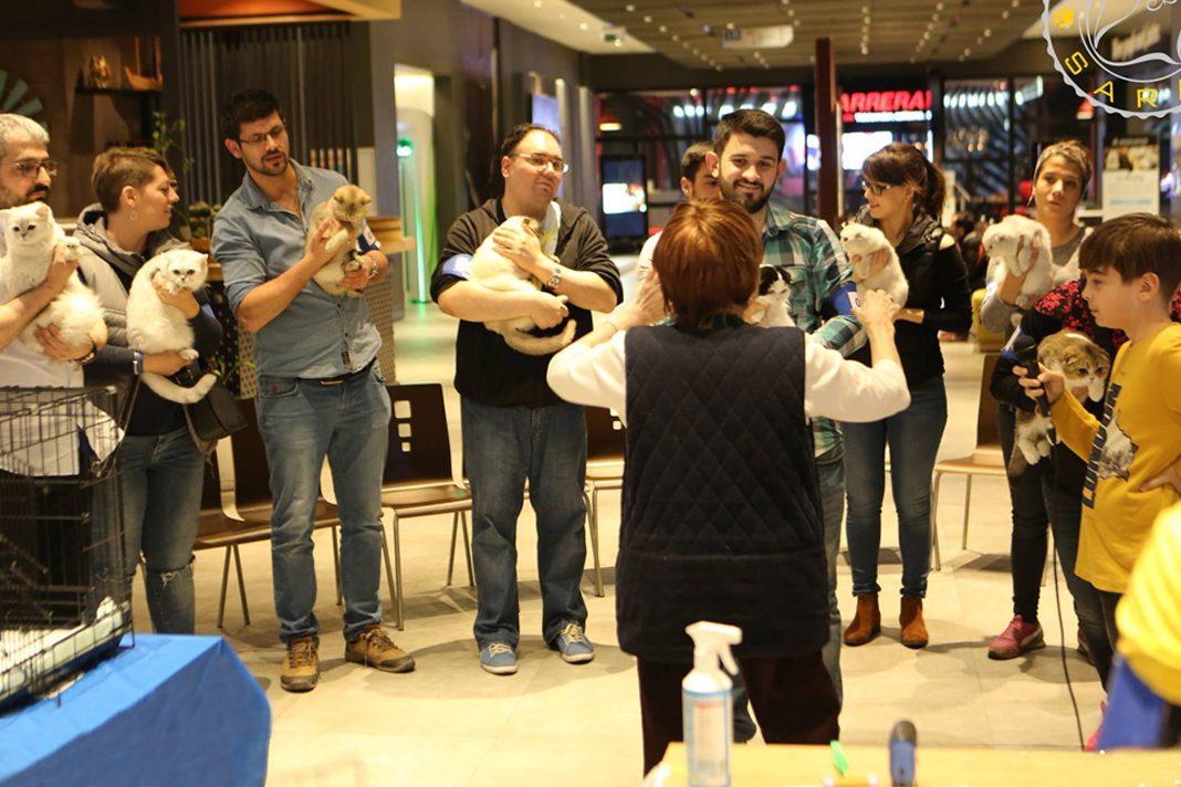Farmina, Patisaray ile kedi severleri buluşturdu!