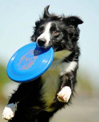 Disc Dog Challenge bu sene Türkiye'de gerçekleşecek!