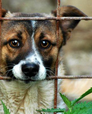 Tayvan'da kedi ve köpek eti yemek artık yasak!