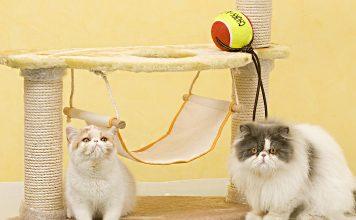 Tırmalama tahtası ve kediler için önemi