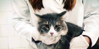 Kedinizi veteriner hekime götürürken işinize yarayacak ipuçları