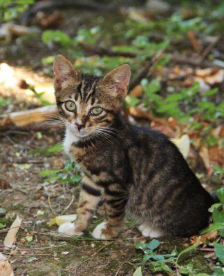 İsviçre'den sokak kedilerine yardım!