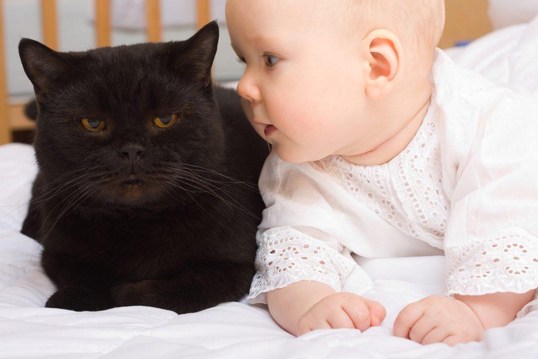 Bebek ile kedinin tanışması...