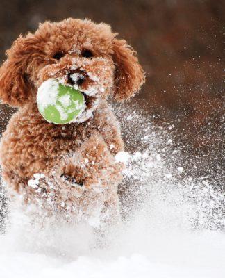 Kış aylarında köpeğiniz için dikkat etmeniz gerekenler