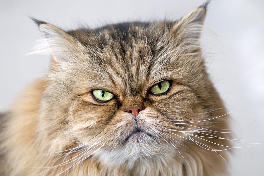 Kedilerde kabızlık...