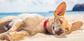 Köpeğimi güneşten nasıl koruyabilirim?