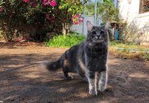 Kör kedi Bıdık Bodrum'da!